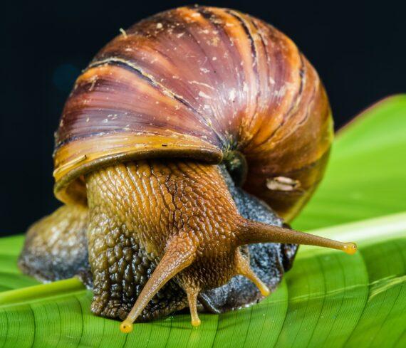 snail 424133 1920