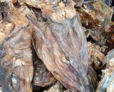 oja.ng stockfish head